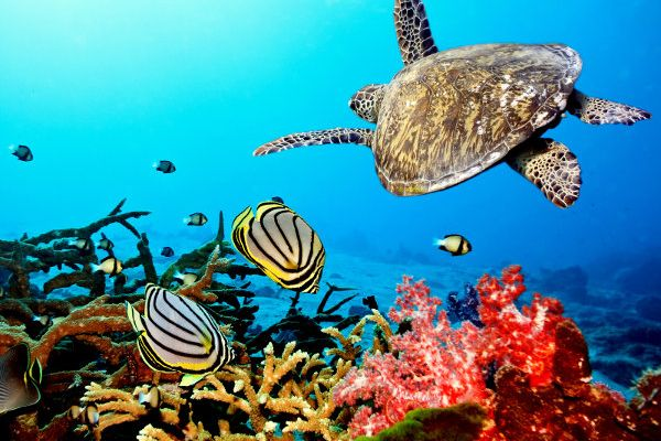 Caribbean Sea Turtle 1600x1200